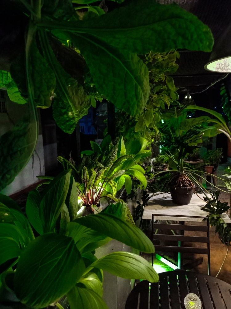 mandys-cafe-dan-woodstork-coffee-padang